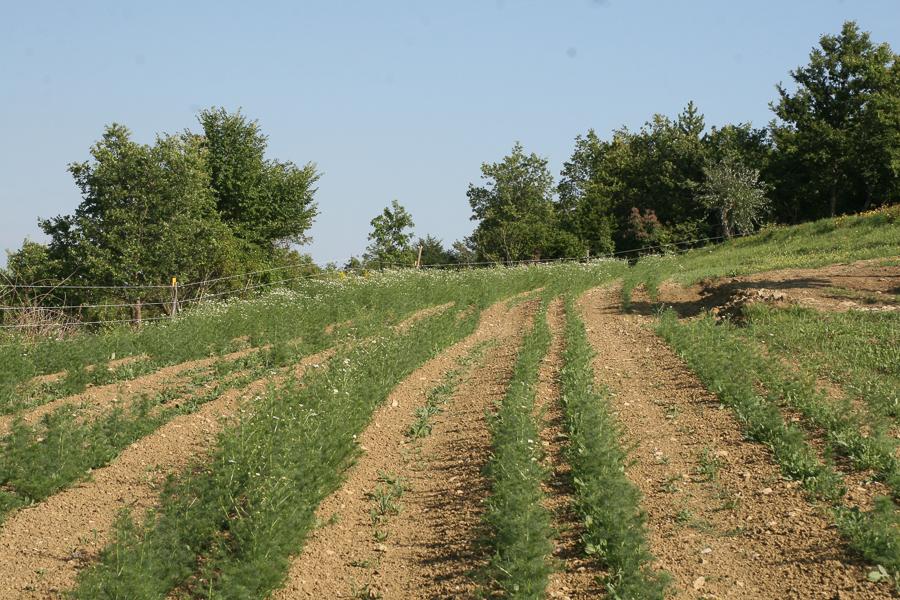 Obisk kmetije Posedi, Zeliščni raj Slovenske Istre