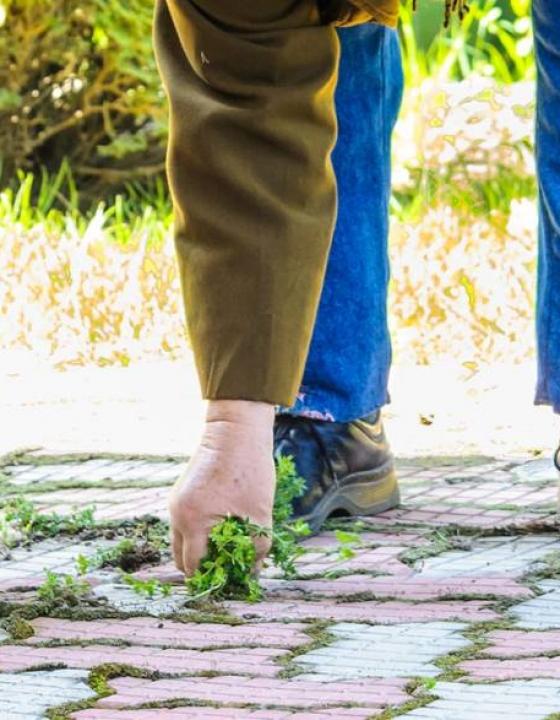 Znebite se plevela brez kemikalij