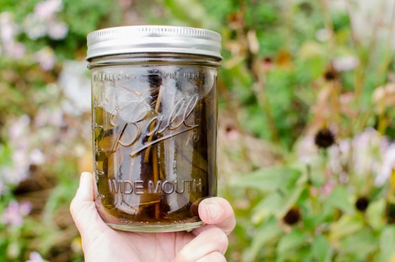 Ameriski slamnik v medu