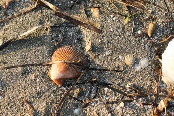 Ideja za nedeljski izlet – Pokopališče školjk