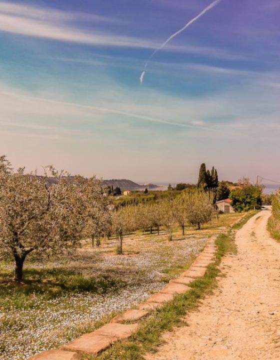 Po obalni Toskani do Mesečevega zaliva